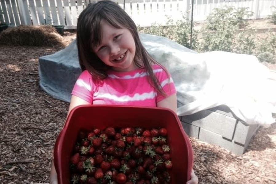 Pharmacy Garden Strawberries Crop